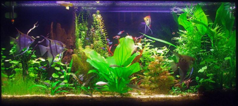 La vita in acquario for Acquario 250 litri